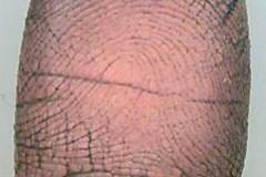 RightForefingerDated3-19-06and3-20-2006